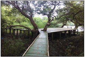 Mangrow Forest