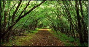 SEETAPALLI FOREST