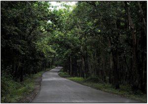 ADDATEEGALA FOREST